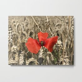 Poppy impact Metal Print