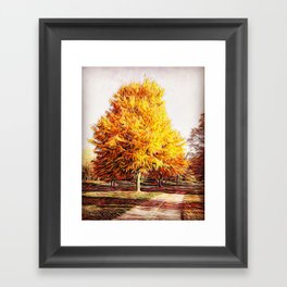 Whimsical Autumn Tree along a Wooded Path Framed Art Print