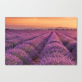 I - Sunrise over blooming fields of lavender in the Provence, France Canvas Print