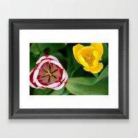 Two Tulips Framed Art Print