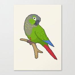 Pixel / 8-bit Parrot: Green-cheek Conure Canvas Print