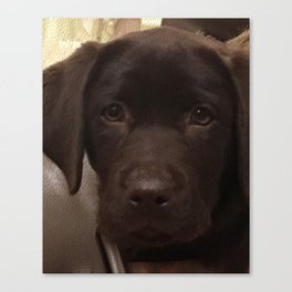 Cute Lab Puppy Canvas Print