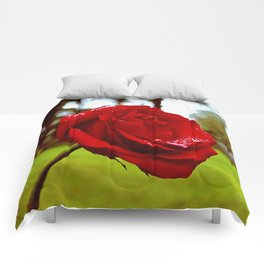 Single red rose Comforters