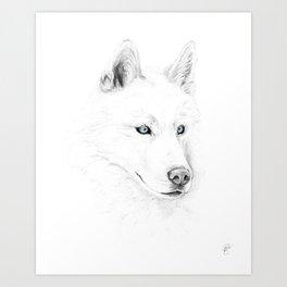 Saber :: A Siberian Husky Art Print