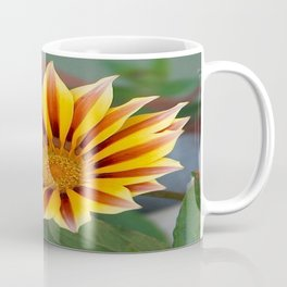 Single Flower Close Up Gazania Red Stripe Coffee Mug