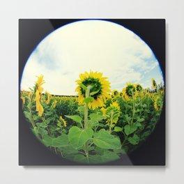 Sunflower 13 Metal Print