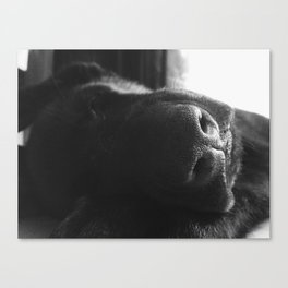 Riley Canvas Print