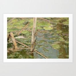 Pair of Green Darner Dragonflies Art Print