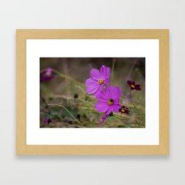 Purple Cosmos Framed Art Print