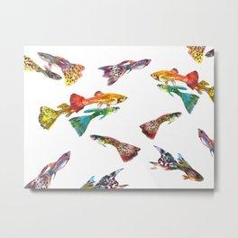 Tropical Colors, Guppy Aquarium Fish , Aquarium Art Underwater Metal Print