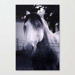 White Whisperer Canvas Print