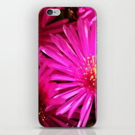 Ice Plant Pink Cactus Flowers iPhone Skin