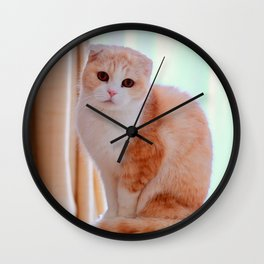 Scottish Fold Cat Wall Clock