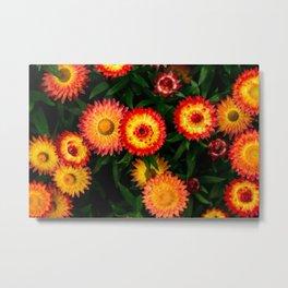 Plant Patterns - Flowery Fireworks Metal Print