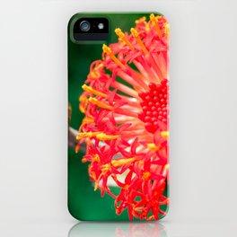 Beautiful Kleinia flower iPhone Case