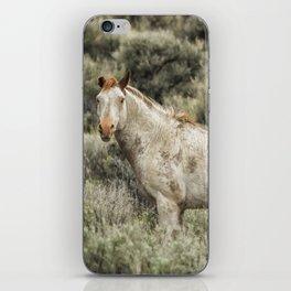South Steens Stallion Alone on the Range iPhone Skin