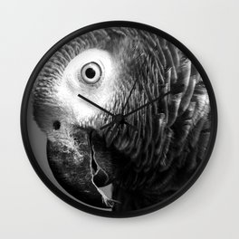 Curiosity Of Bo - African Grey Parrot Photography Animals Wall Clock