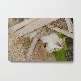 Little billy goat Metal Print