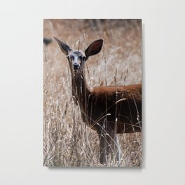 A Deer in Summer Metal Print