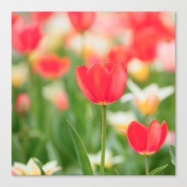Bunch Of Tulips #decor #society6 #buyart Canvas Print
