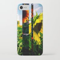maryland iPhone & iPod Cases featuring Sunflowers in Maryland by kpatron