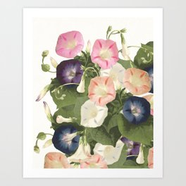 Morning Glory - floral print Art Print