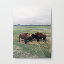 Bison Battle Metal Print