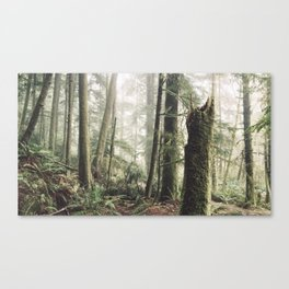 Wise Woods Canvas Print