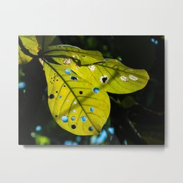Phillipine Leaves Metal Print