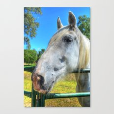 Horsey!  Canvas Print