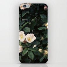 Snowwhite iPhone & iPod Skin