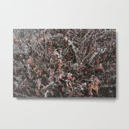Frost Spiked Barberry Bush Metal Print