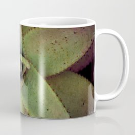 Succulent cactus close-up - Aloe Photography #Society6 Coffee Mug