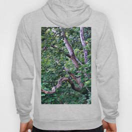 An Old Branch Hoody