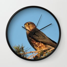Cooper's Hawk in Evening Light Wall Clock