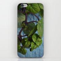 swedish iPhone & iPod Skins featuring Swedish ivy by Camaracraft