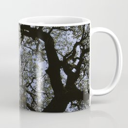 Oak Tree Reaching For The Sky Coffee Mug