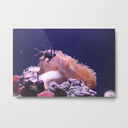 Pacific Coral Reef Fish Swimming in the Purple Metal Print
