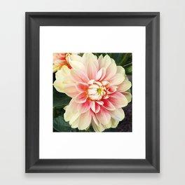 442 - Dahlia Framed Art Print