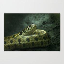Alerted snake Canvas Print