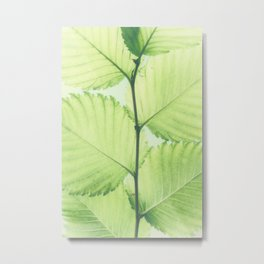 Turkish hazel leave – Baumhaselblätter Metal Print