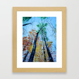 Up Into The Trees Framed Art Print