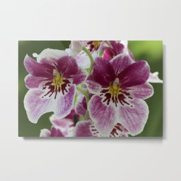 Twin Alien Orchids Metal Print