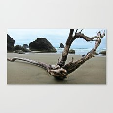 Drift Wood Paradise  Canvas Print