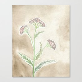 Pink Yarrow Canvas Print