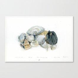 Seashell Composition 3 Canvas Print