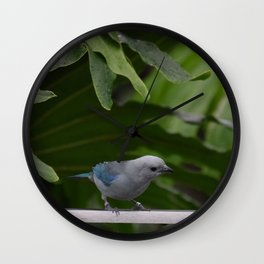 National Aviary - Pittsburgh - Blue Grey Tanager Wall Clock