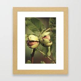 Walnuts Framed Art Print
