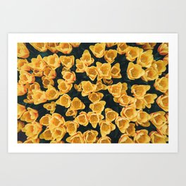 Yellow Tulips From Above Art Print