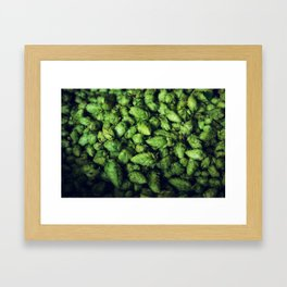 Hops by the bushel. Framed Art Print